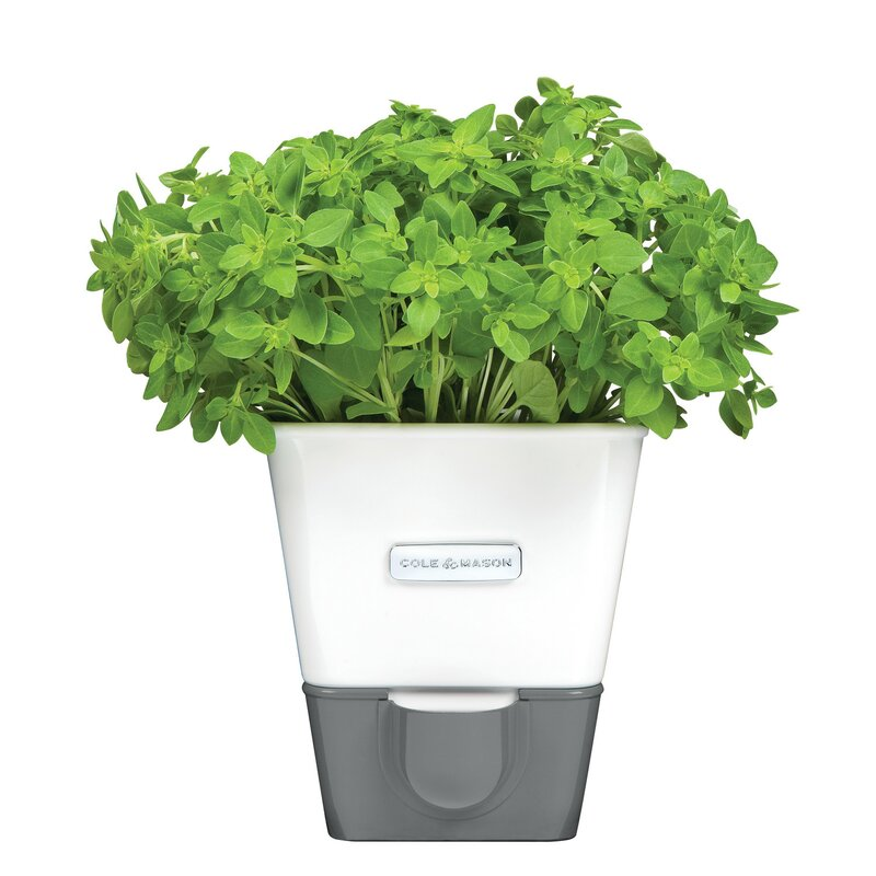 Cole & Mason Indoor Herb Garden Self-Watering Carbon Steel Pot ...