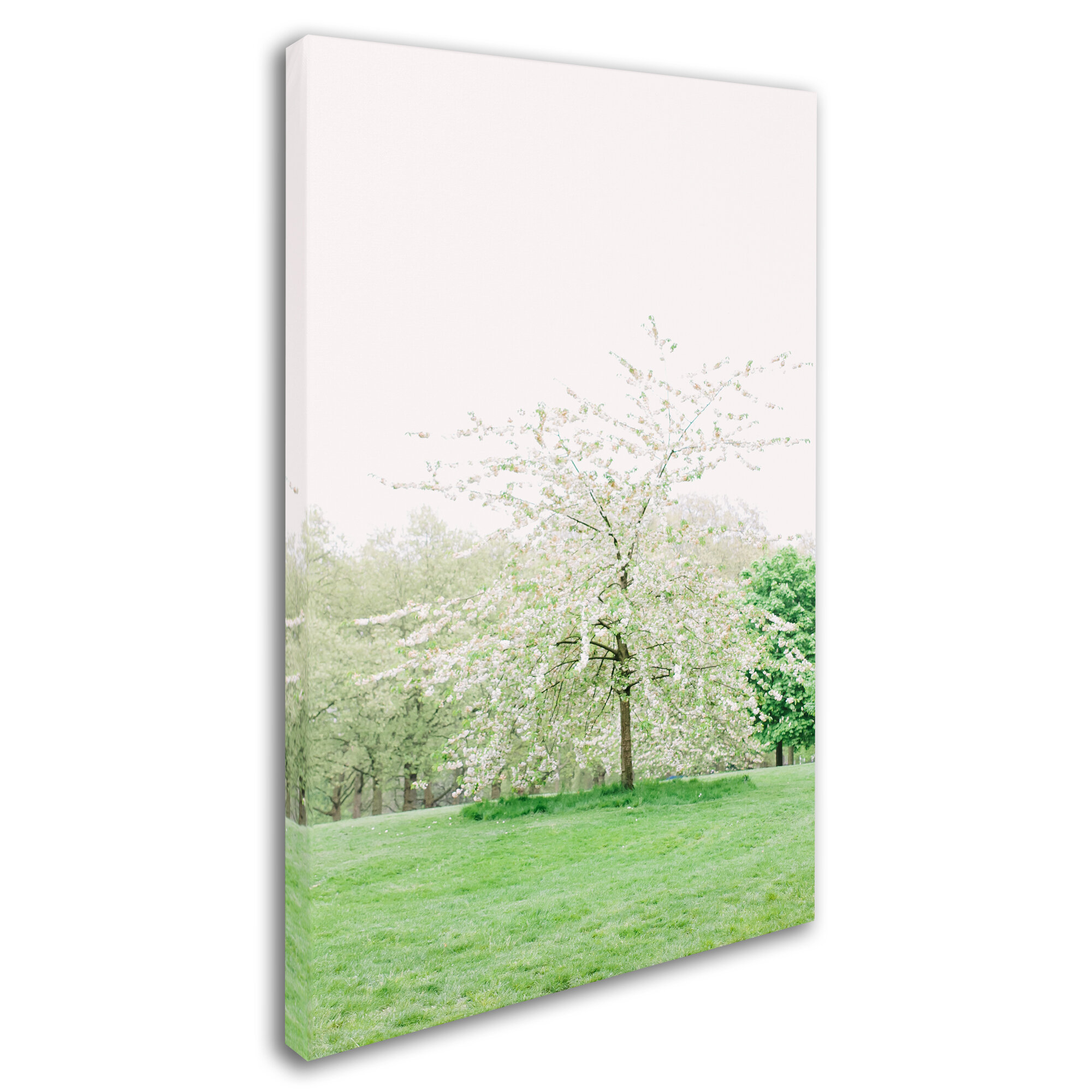 Trademark Art White Cherry Blossom Tree Photographic Print On Wrapped Canvas Wayfair