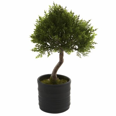 Cedar Bonsai Tree in Planter Charlton Home
