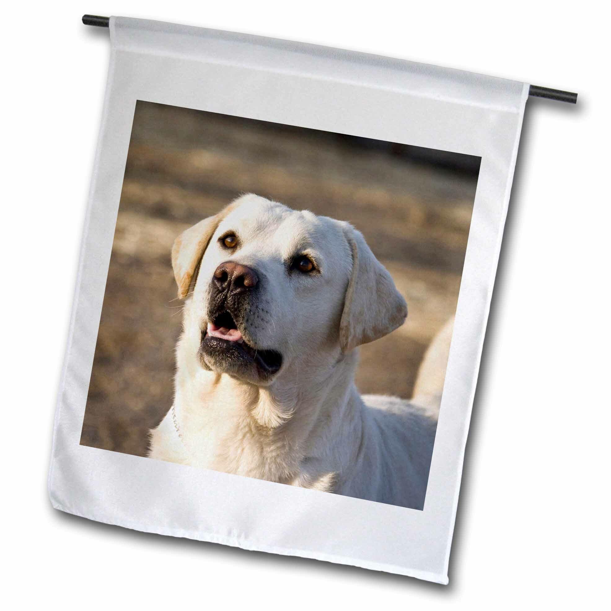 3drose Labrador Retriever Dog Polyester 18 X 12 In Garden Flag Wayfair