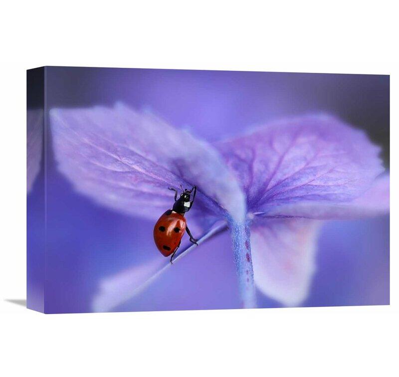 Global Gallery Ladybird On Purple Hydrangea By Ellen Van Deelen Photographic Print On Wrapped Canvas Wayfair