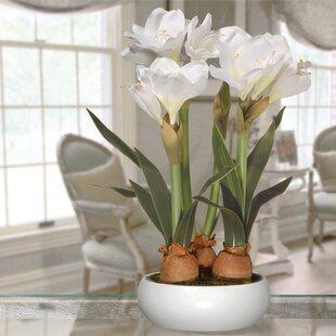 Amaryllis Floral Arrangement in Pot