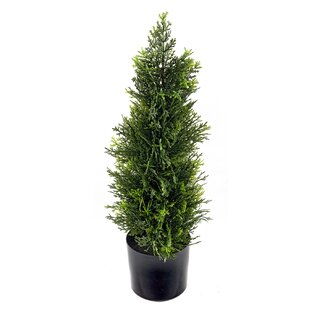 Floor Cedar Plant In Pot By The Seasonal Aisle