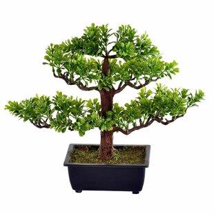 Indoor Bonsai Trees Wayfair