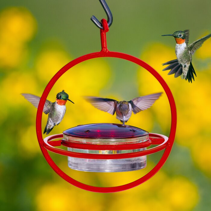 real model honeysuckle window bird hummingbird so feeder products humming grande