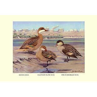 Bahama Galapagos Island and African Red-Billed Ducks by Louis Agassil Fuertes Painting Print  sc 1 st  Wayfair & Tommy Bahama Wall Art   Wayfair