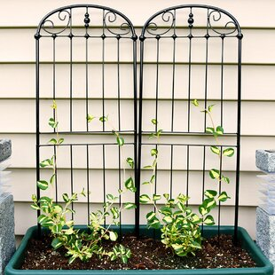 Charlton Home Media Traditional Steel Gothic Trellis (Set of 2)