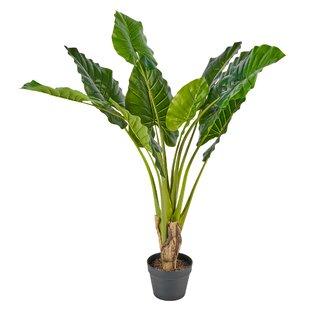 Floor Banana Leaf Tree Pot Image