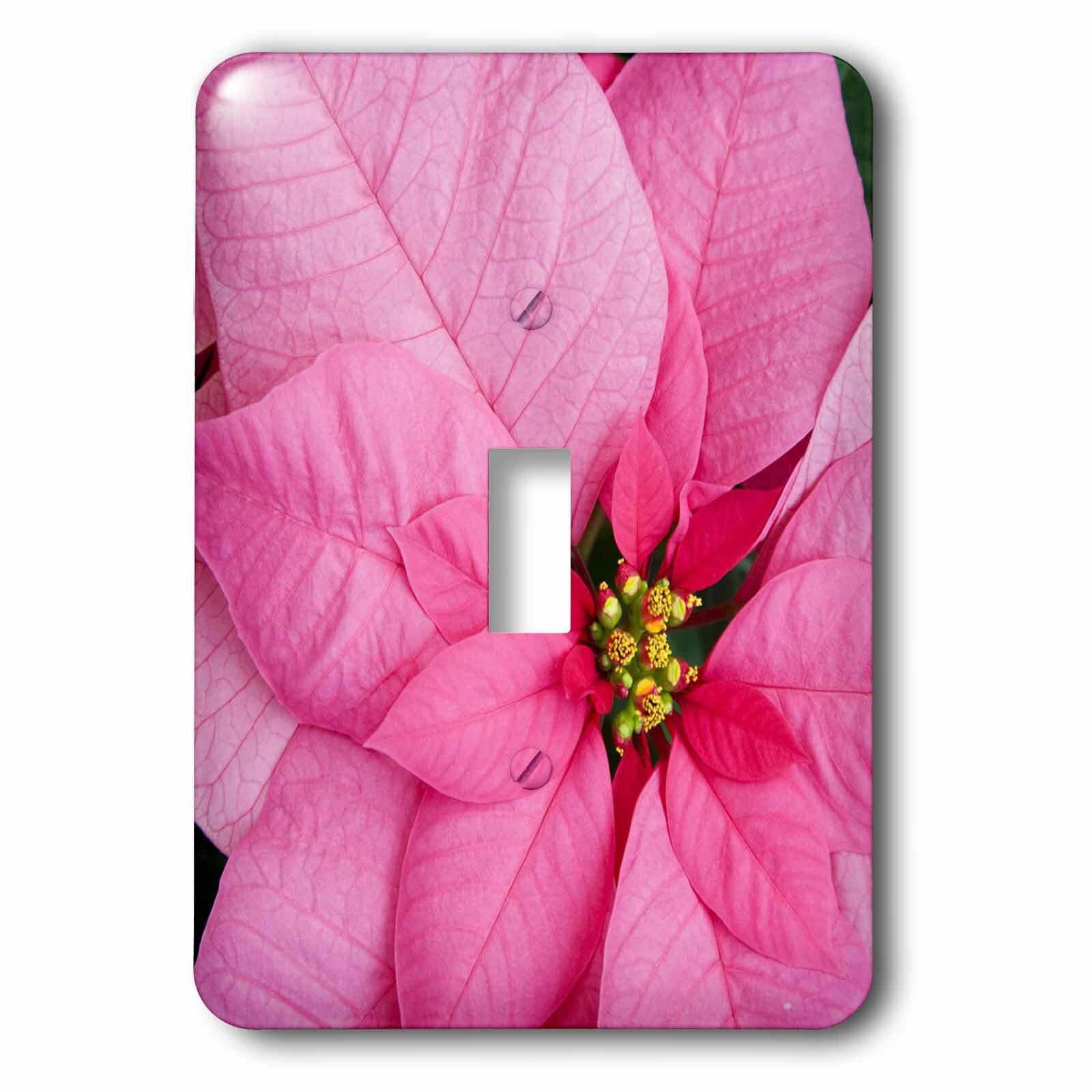 3drose Wa Molbaks Nursery Poinsettia Flower Festival 1 Gang Toggle Light Switch Wall Plate Wayfair