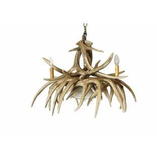 Millwood Pines Edie 4-Light Novelty Chandelier