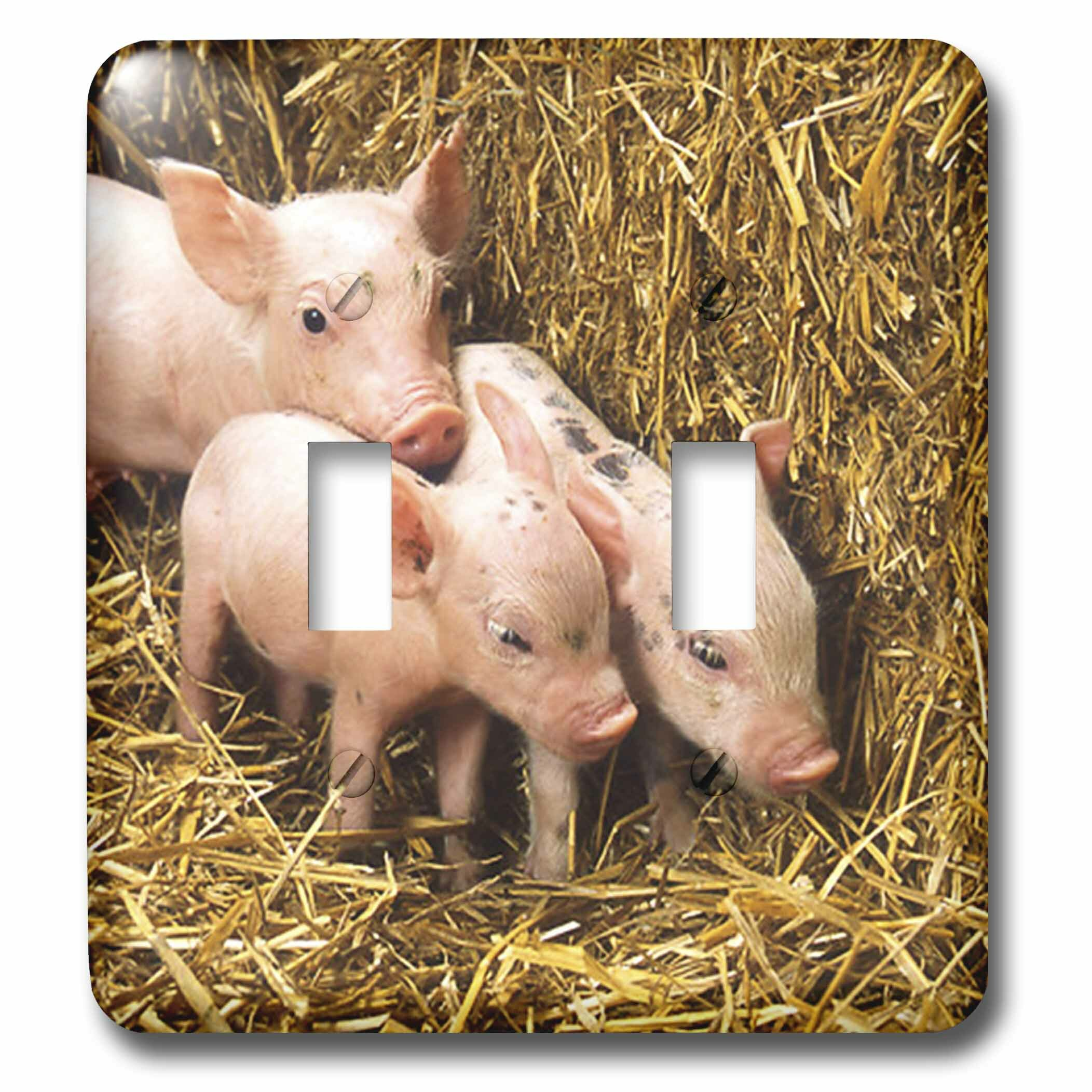 3drose 3 Little Pigs And Hay 2 Gang Toggle Light Switch Wall Plate Wayfair