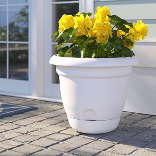 Elaina Self-Watering Plastic Pot Planter by Sol 72 Outdoor