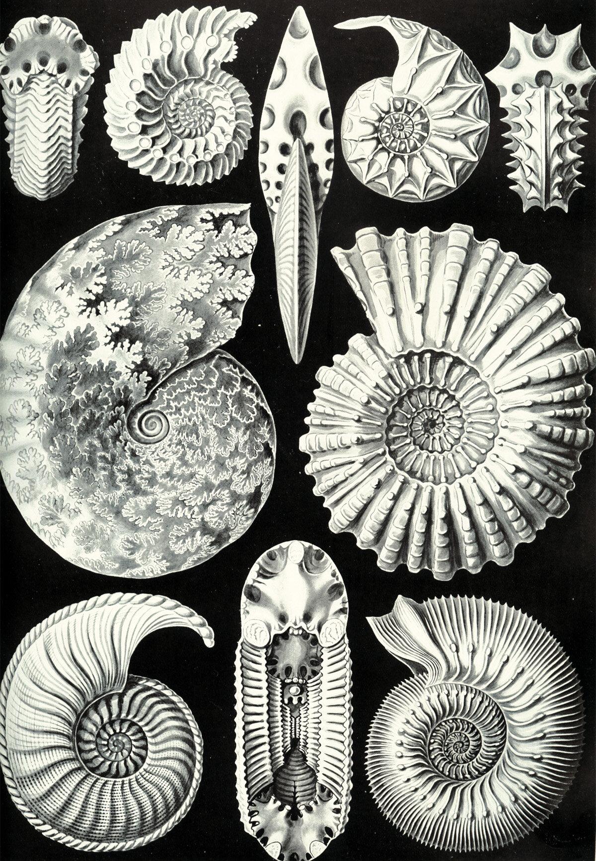 Evive Designs Vintage Seashells Iii By Julia Kearney Graphic Art Print Wayfair