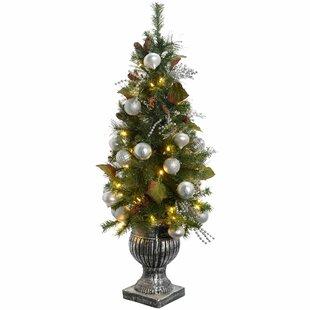 Weihnachtsbaum Im Topf Geschmückt.Weihnachtsbäume Eigenschaften Eingetopft Zum Verlieben Wayfair De