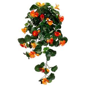Nasturtium Hanging Bush