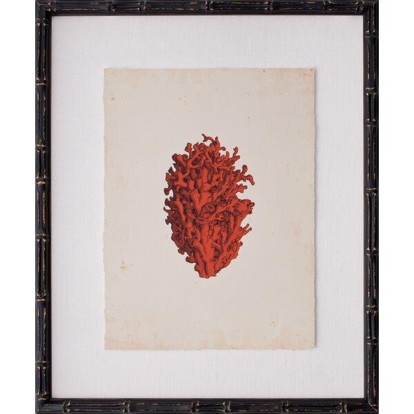 Mirror Image Home Mini Coral Iv Framed Graphic Art Wayfair