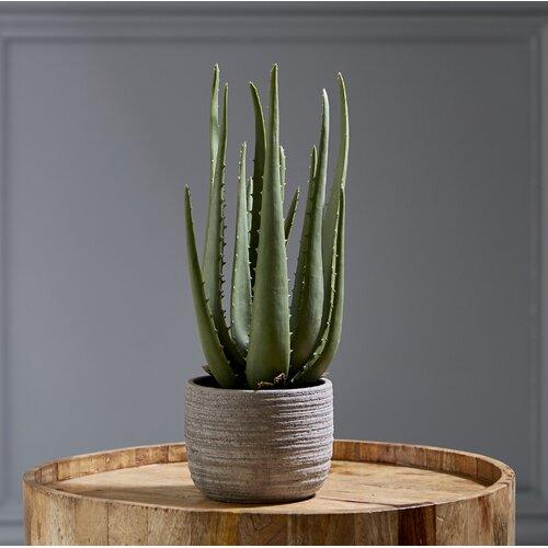 Kunstpflanze Sukkulente in Topf Hashtag Home   Dekoration > Dekopflanzen > Kunstpflanzen   Hashtag Home