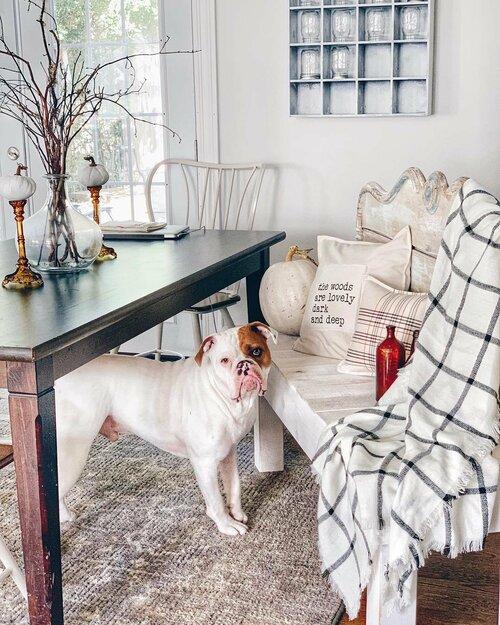 Pets Dining Room Design Ideas Wayfair