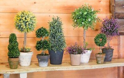 Fleur De Lis Living Rosemary Bush Herbs Topiary In Pot Wayfair