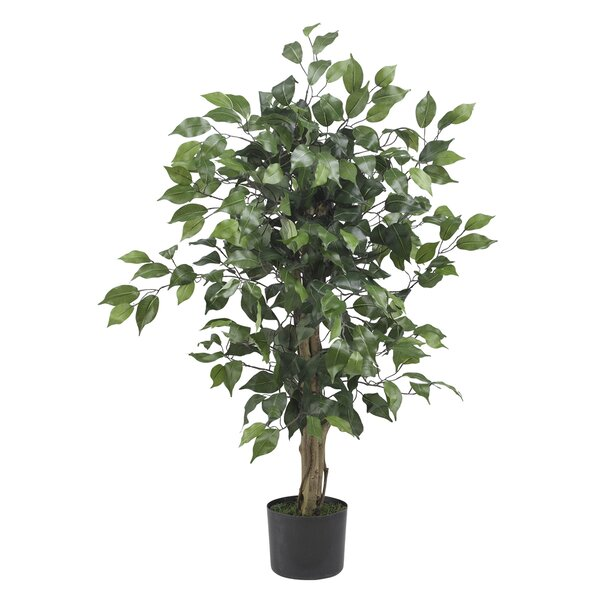 alcott hill parkes silk ficus tree in pot & reviews | wayfair