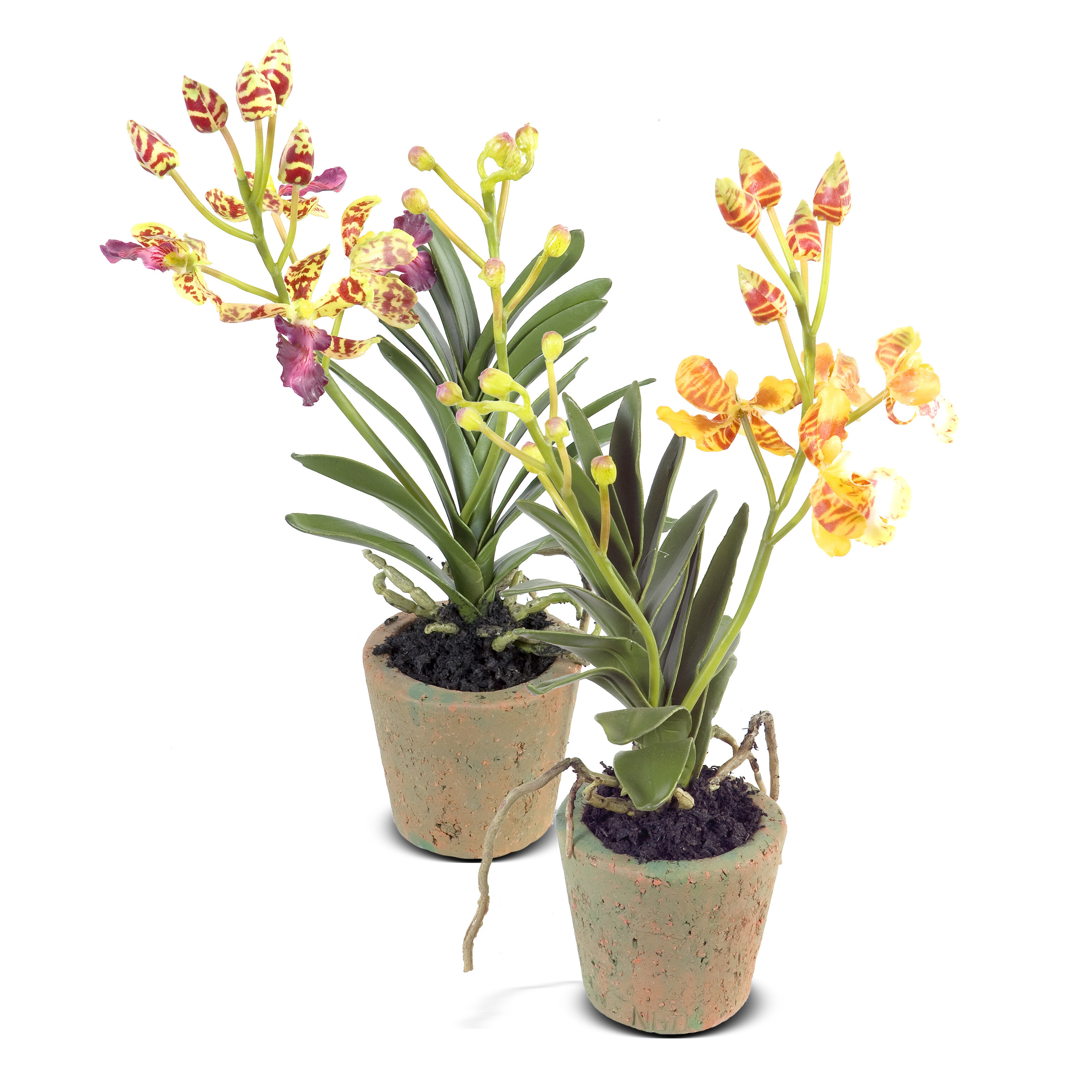 New Growth Designs Faux Vanda Orchid Flower In Pot Wayfair Ca