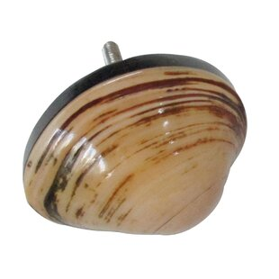 Shell Cabinet Novelty Knob (Set of 8)