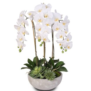 Silk Phalaenopsis And Succulents Orchid Floral Arrangement by Bungalow Rose Wonderful