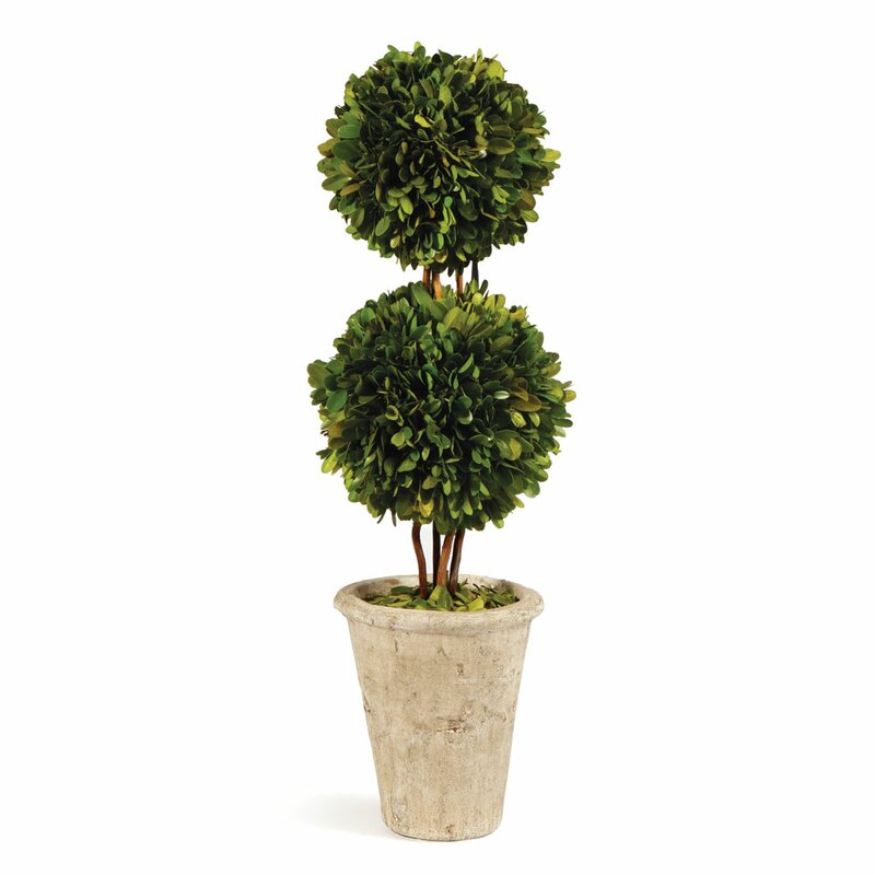 One Allium Way Preserved Boxwood Double Ball Topiary in Pot ...