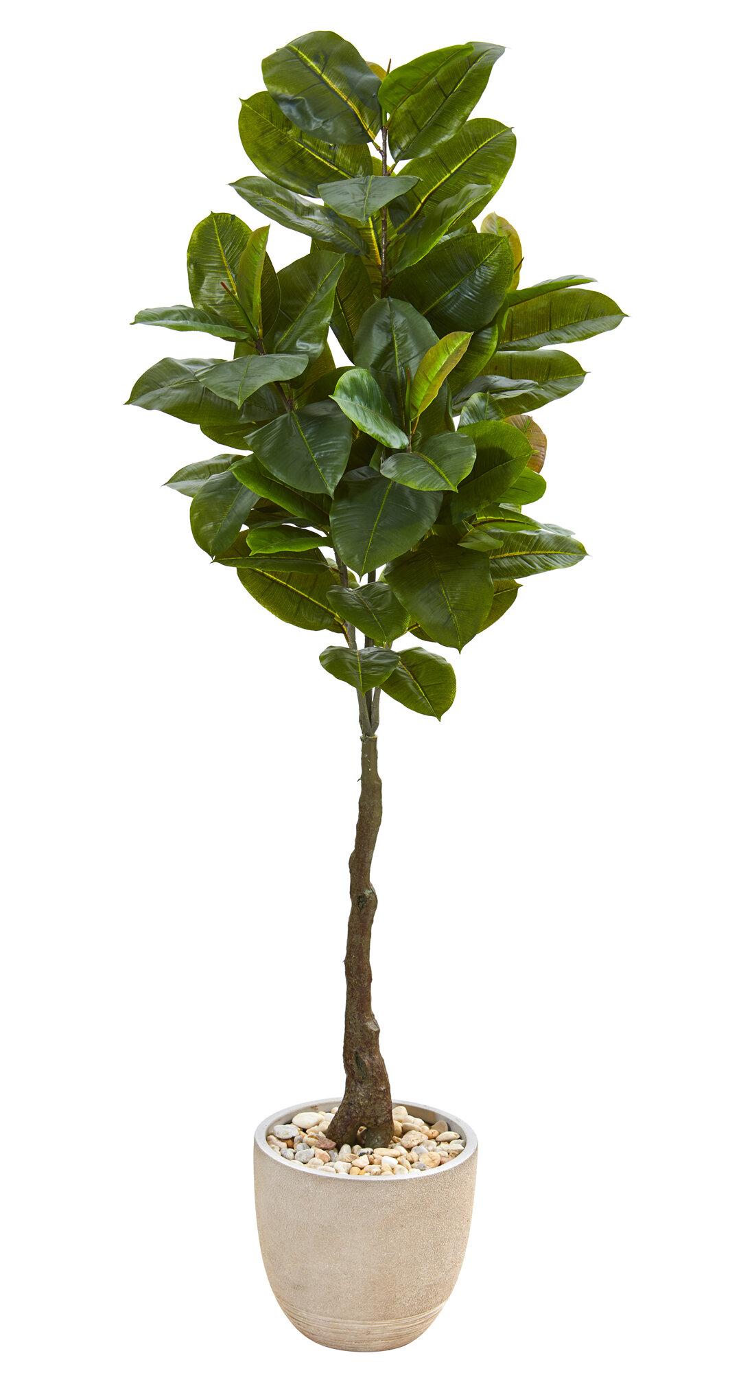Gracie Oaks Artificial Rubber Leaf Tree In Pot Wayfair