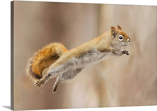 Canvas On Demand I Can Fly By Mircea Costina Photographic Print On Canvas Wayfair