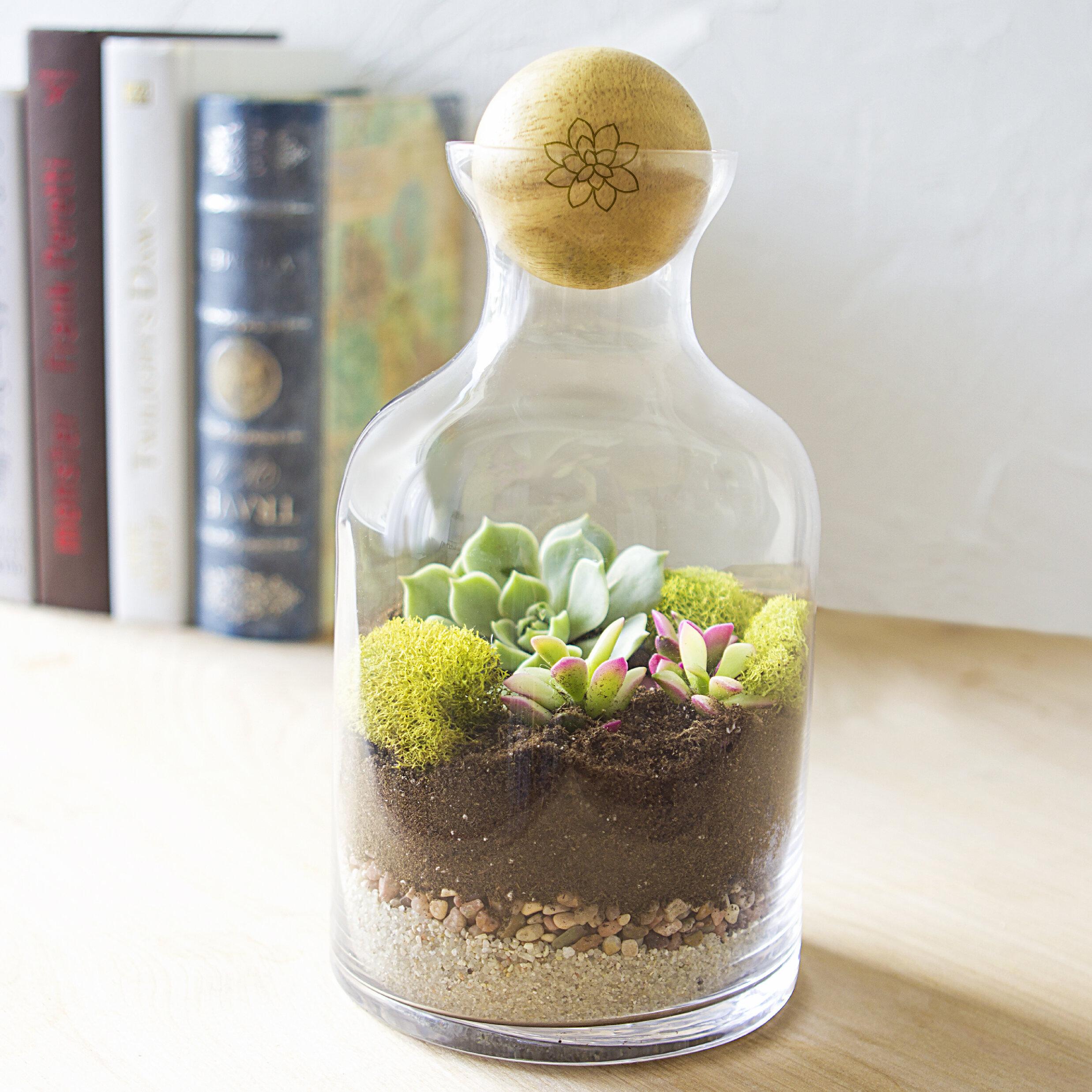 Cathys Concepts 56 Oz Glass Succulent Terrarium Vase Wayfair