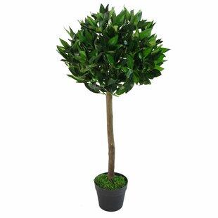 Topiary Bay Tree Image