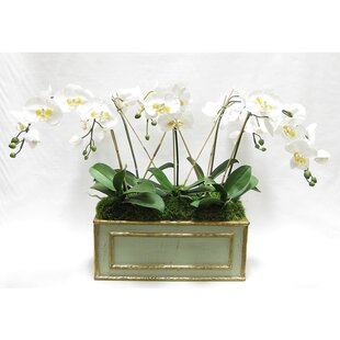 Orchids Floral Arrangement in Wooden Medium Rectangle Container