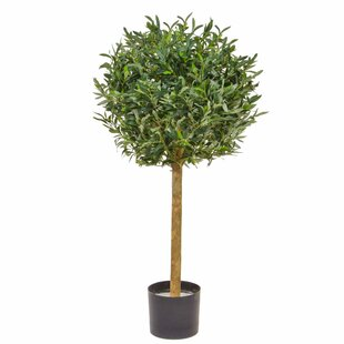 Artificial Olive Tree Image