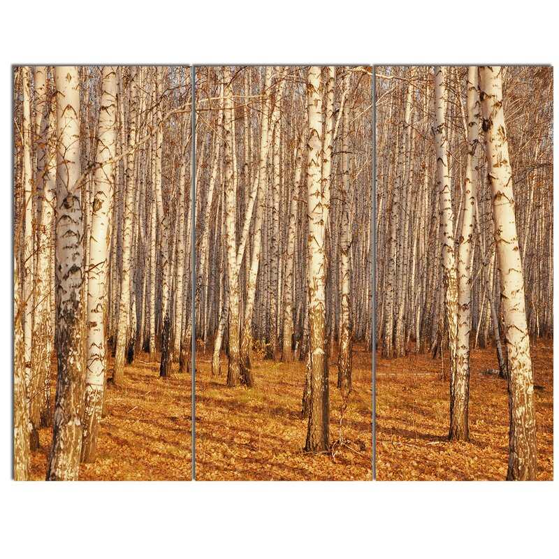 Designart Dense Birch Forest In The Fall 3 Piece Photographic Print On Wrapped Canvas Set Wayfair