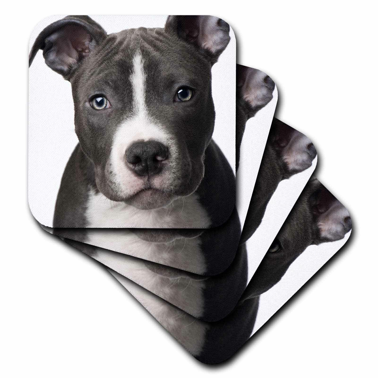 3drose Ceramic Tile Coasters American Pit Bull Terrier Puppy Set Of 4 Cst 4240 3 Wayfair