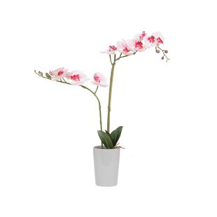 artificial orchids in pots | wayfair.co.uk