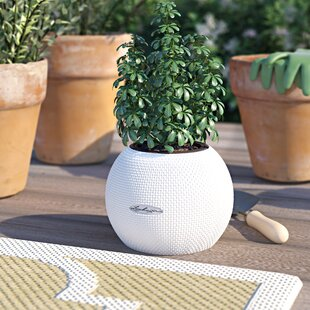 Review Puro Trend Self-Watering Plant Pot