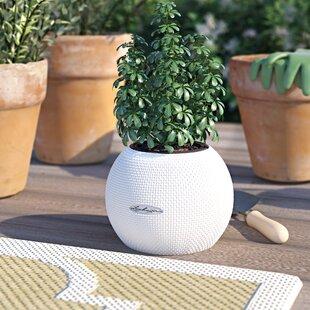 Great Deals Puro Trend Self-Watering Plant Pot