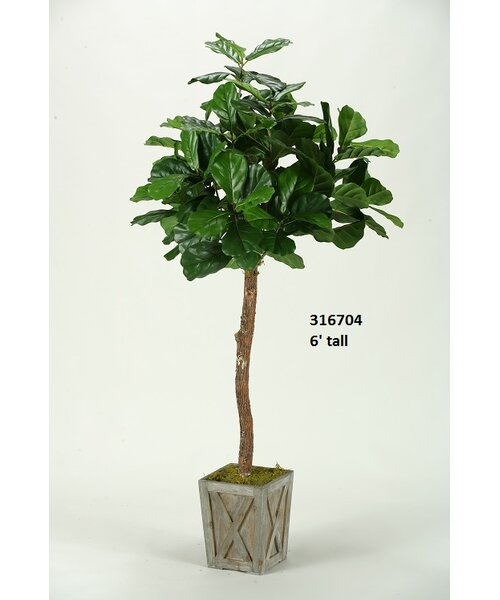 bay isle home fiddle leaf fig tree in planter reviews wayfair