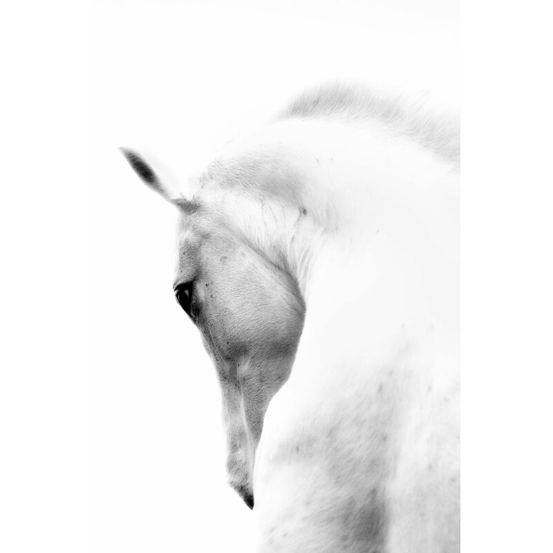 'White Horse Wrapped' Photographic Print on Canvas