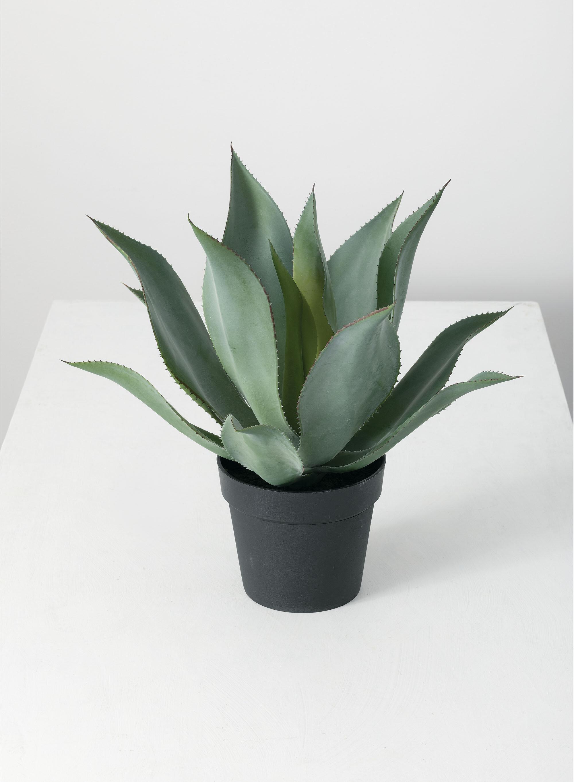 Bayou Breeze Agave Plant In Pot Wayfair