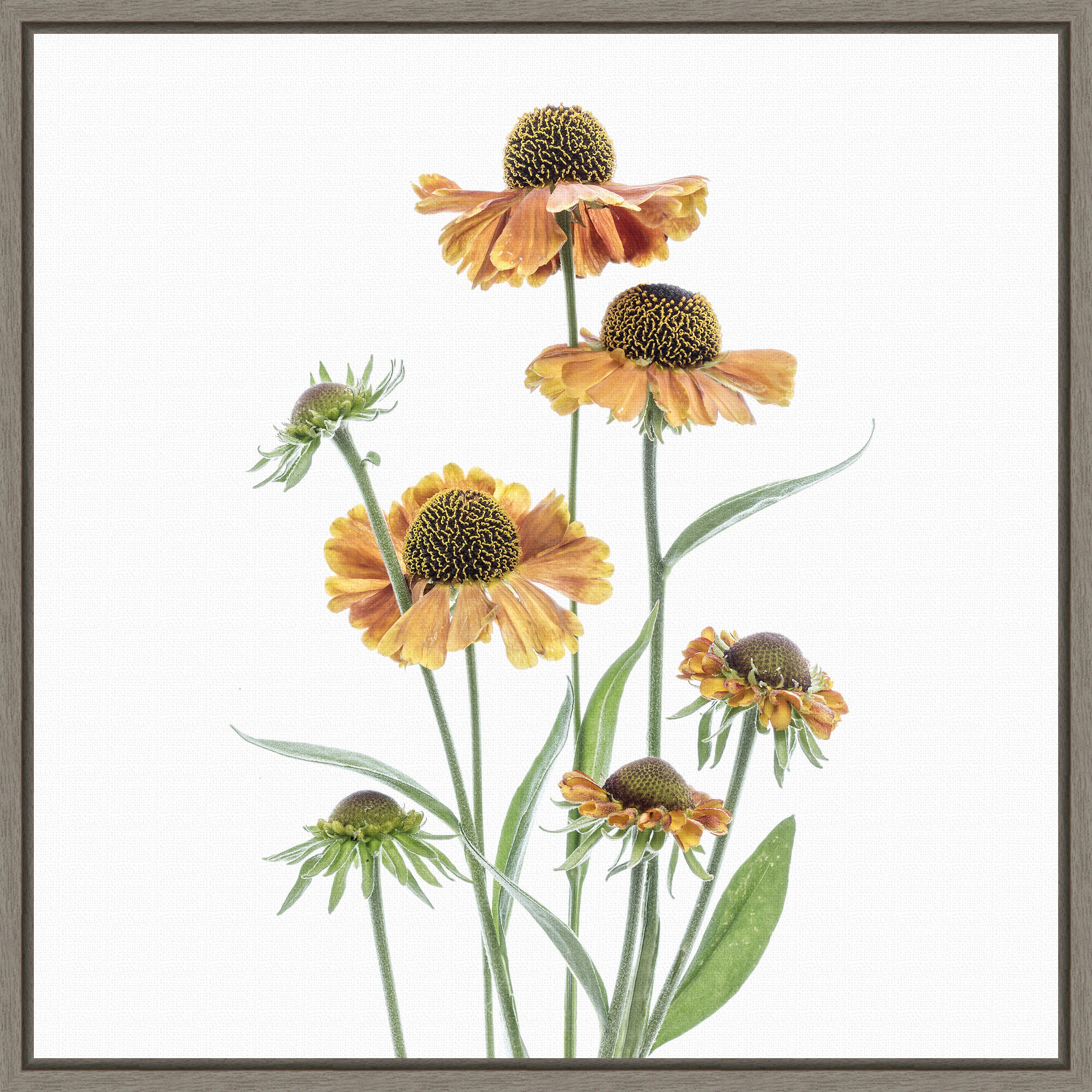 Gracie Oaks Helenium Yellow Flowers By Mandy Disher Floater Frame Painting Print On Canvas Wayfair