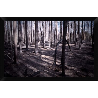 San Bernardino Burned Forest Framed Photographic Print on ...