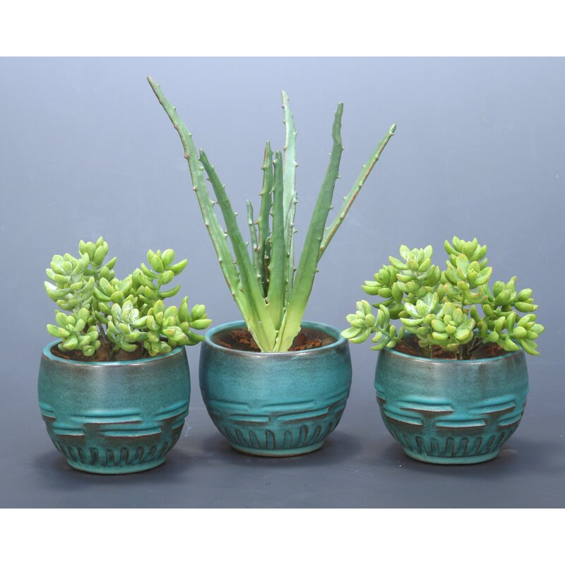 Distinctive Designs 3 Piece Succulents Desk Top Plant In Pot Set Reviews Wayfair