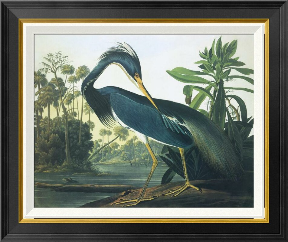 'Louisiana Heron' by John James Audubon Framed Wall Art - Shop Drew's Honeymoon House {Guest Bedrooms} #heron #Louisianaheron #birdprint