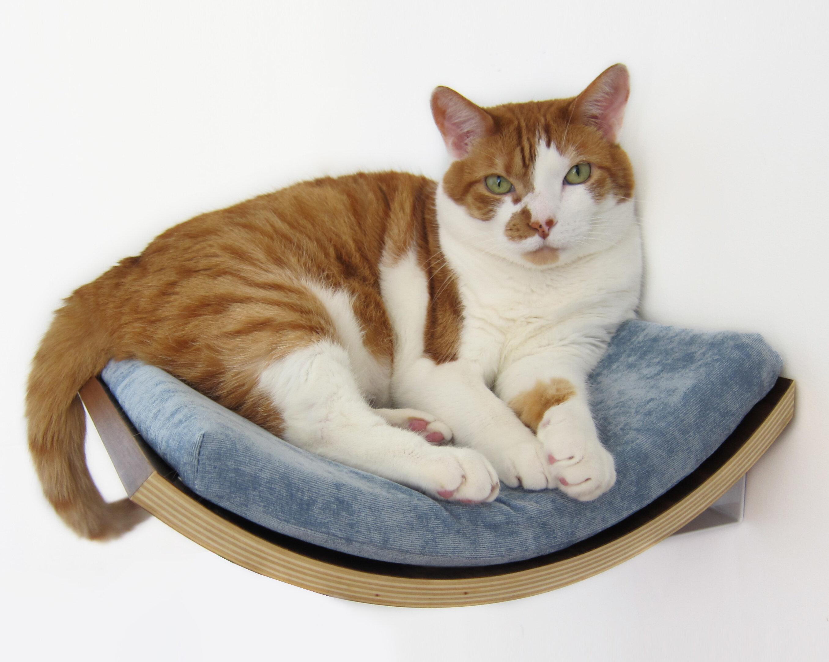 Tucker Murphy Pet 5 Musson Curve Wall Mounted Cat Perch Wayfair