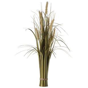 Floor Cattail Grass By The Seasonal Aisle