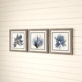 Coastal Seaweed - 3 Piece Picture Frame Graphic Art Print Set on Paper
