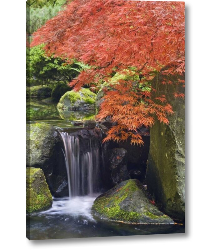 Winston Porter Oregon Portland Waterfall And Japanese Maple Photographic Print On Wrapped Canvas Wayfair